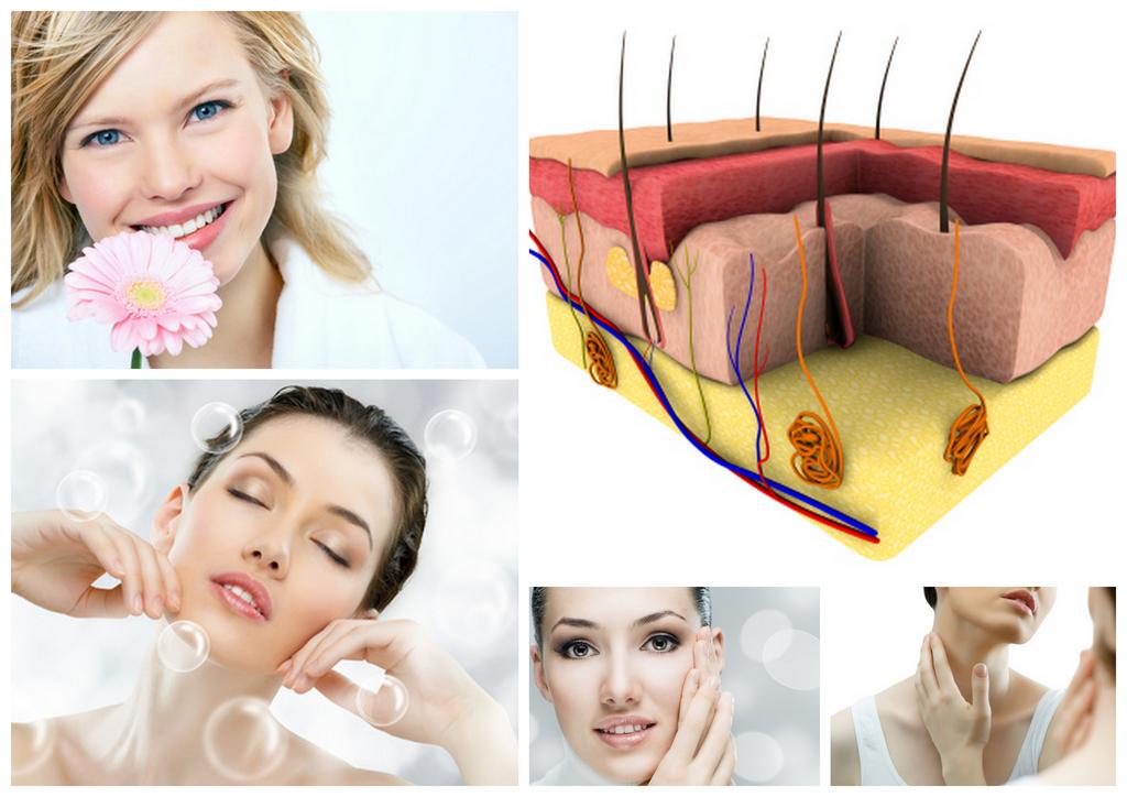 Przekrój przez skórę i twarze kobiet