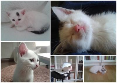 Adoptowany kotek